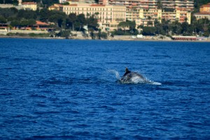 A la rencontre des dauphins